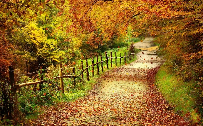 country-road