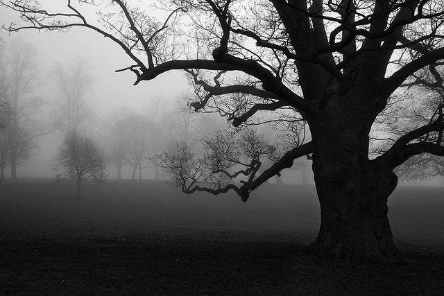 tree-in-winter-dusk
